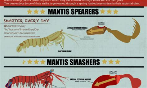 Kaos Oceanseven Awesome Animal 30 Tx what are the largest sizes of giants daily infographic