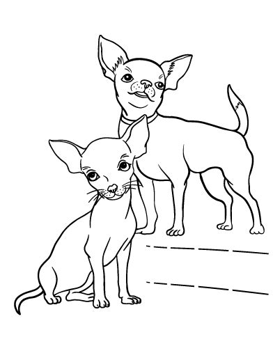 coloring pages chihuahua dogs chihuahua coloring pages for kids coloring home