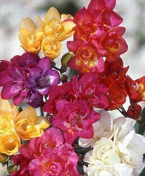 Dainty Freesia Heels flowerbomb by olivier polge carlos benaim domitille