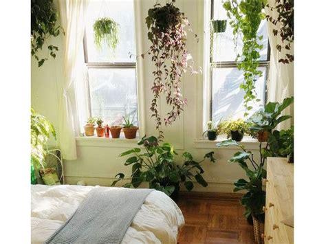 piante da letto le piante in da letto fanno donna moderna