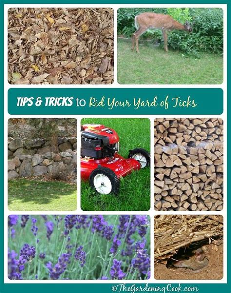 spray for ticks in backyard tips tricks to get the ticks out of your yard gardens