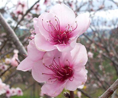 new year flower types file flowers jpg