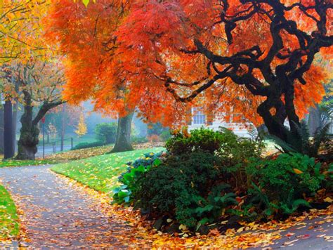 amazing color   fall landscape hgtv