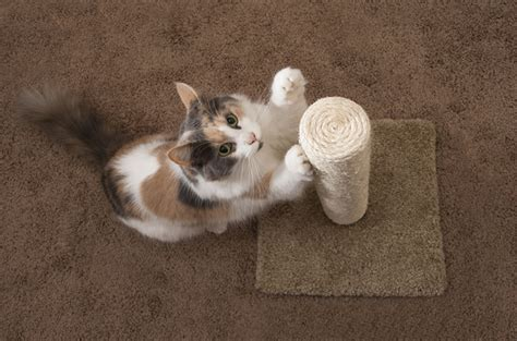 cat keeps clawing how to choose the right scratching post for your cat