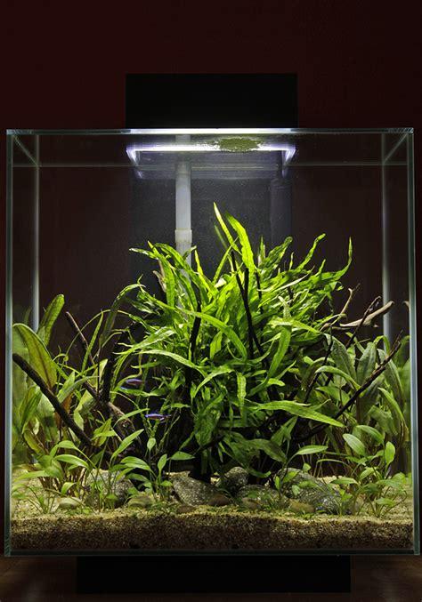 Aquascape Aquarium Plants Low Maintenance Fluval Edge 46 Litre Uk Aquatic Plant