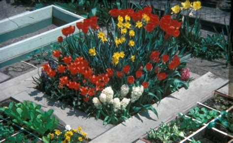 Square Foot Gardening Flowers Why Add Flowers To Your Veggie Garden Mel Bartholomew Creator Of Square Foot Gardening