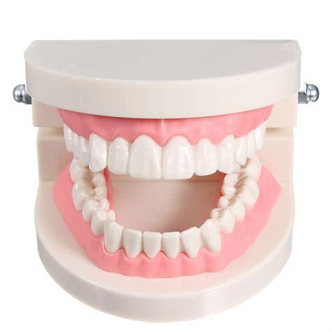 standard tooth teaching giant dental dentist teeth child
