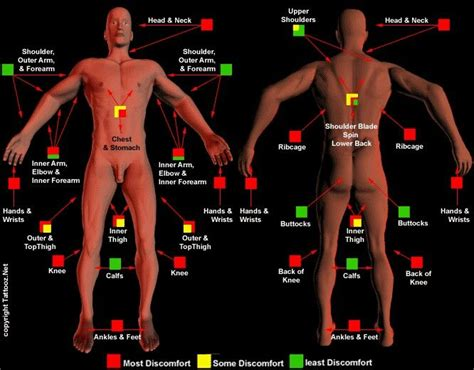 tattoo placement least painful tattoo placement pain chart tats pinterest