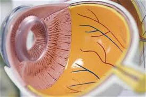 dolore interno all occhio dolore all interno dell occhio 28 images nicoletta www