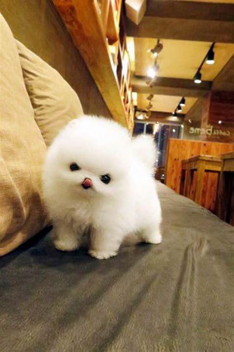 Imagenes De Animales Adorables   animales adorables
