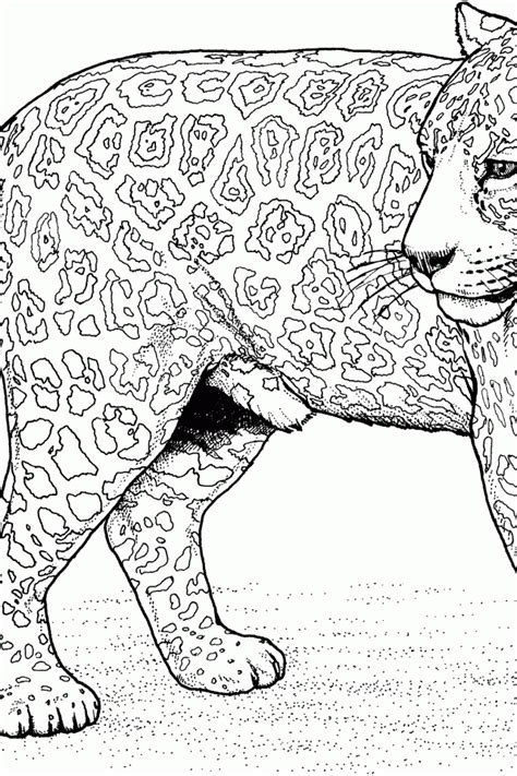 big cat coloring pages az coloring pages