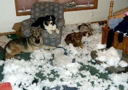 dog eating couch when your dog s had enough try this to prevent