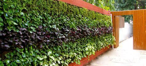 imagenes de paredes verdes paredes verdes para cultivar alimentos descubre