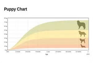 puppy weight chart template height weight chart templates 12 free excel pdf