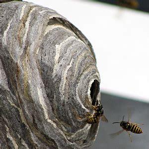 Wespennest Balkon wespennest auf dem balkon wespennest entfernen