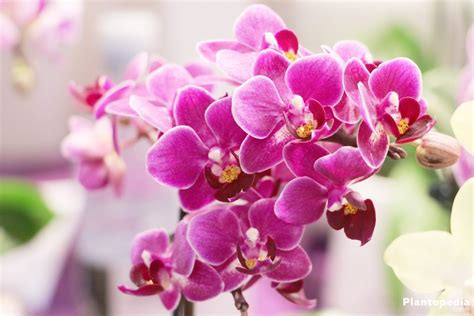 orchids facts 100 facts about orchids 6 incredible flowers that