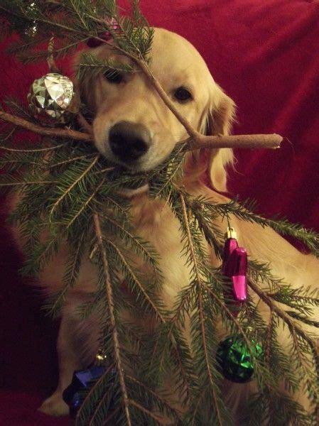 18 christmas pet photo ideas