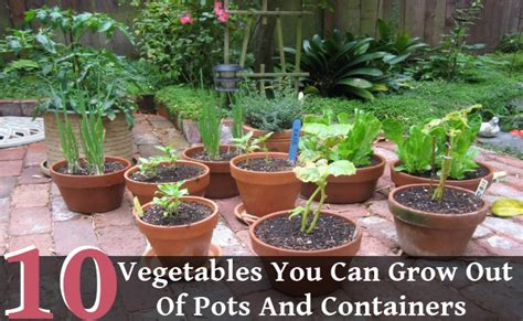 vegetables you can grow in pots 10 vegetables you can grow out of pots and containers