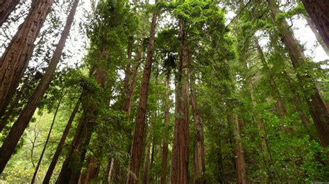 the wood for the trees one s view of nature books mlewallpapers up to redwoods
