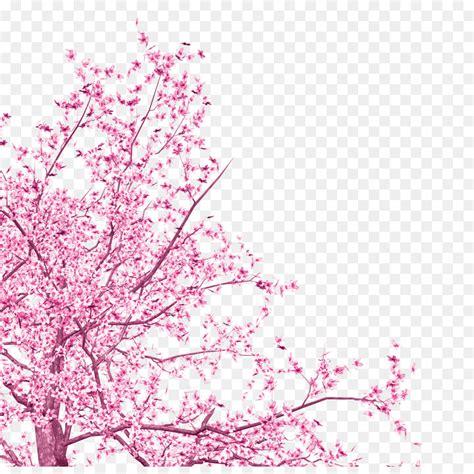 cherry blossom tree png    transparent cherry blossom png