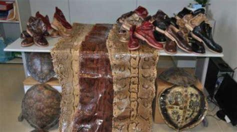 ufficio dogane pisa sequestrate pelli di pitone carapaci di tartarughe e