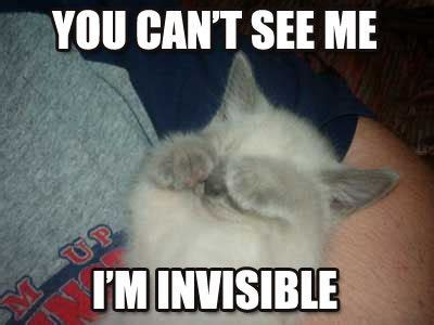 Lolcat You Can T See Me I M Invisible Funny