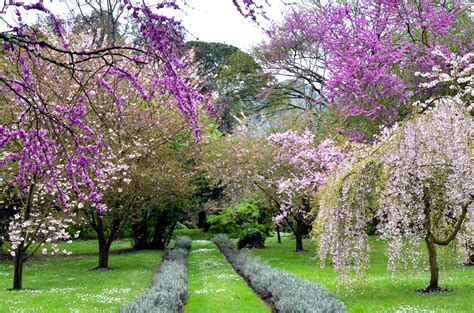 what is spring file spring in ninfa garden jpg wikimedia commons