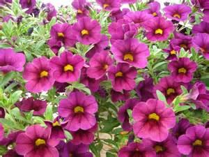 perennial flowers they bloom all season long perennial flowers come back year after year