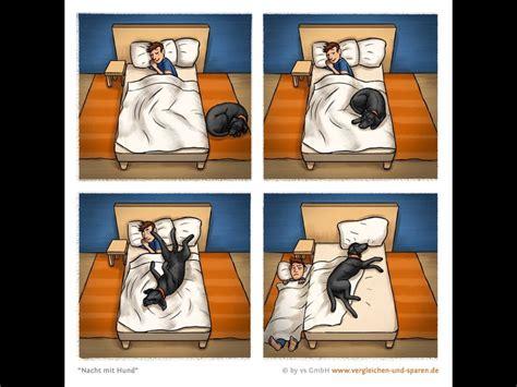 honden moppen pagina  hondenforum