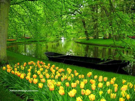 World Best Flower Garden Beautiful Netherland Flower Garden Inspiration Photos Gardens Beautiful