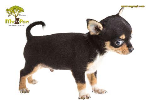 imagenes que se muevan de animales 191 por qu 233 los perros mueven la cola mypopi