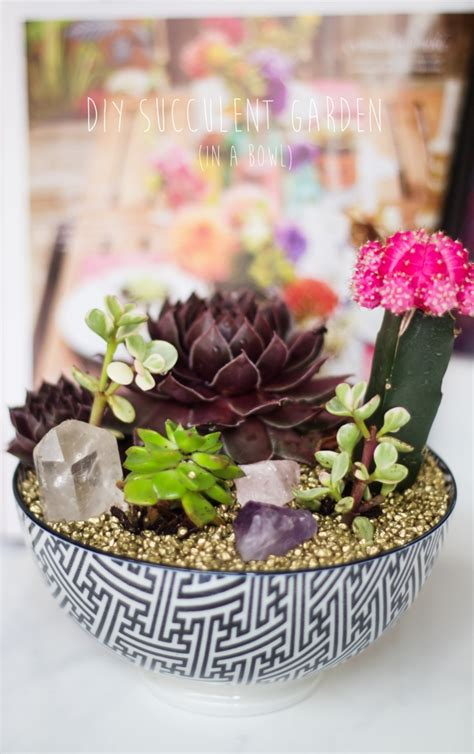 diy succulents diy succulent garden a little craft in your day