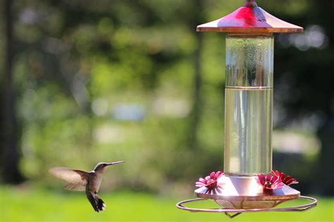 hummingbird feeder cleaning downeast thunder farm