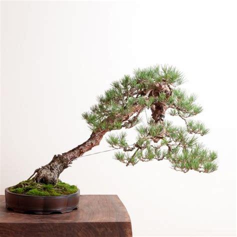 bonsai bonsai mirai bonsai pinterest bonsai