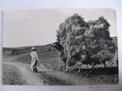 fotos antiguas lanzarote postal antigua de lanzarote canarias faenas comprar