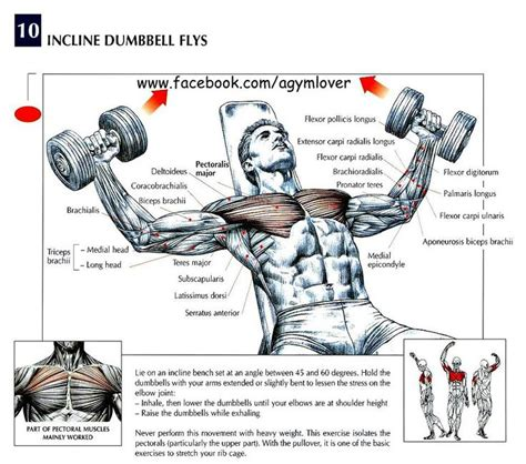 dumbbell bench press muscles worked 16 best tricep exercises images on pinterest fitness
