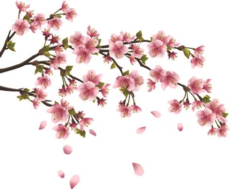 Blossom Free cherry blossom free vector 874 free vector for commercial use format ai eps cdr
