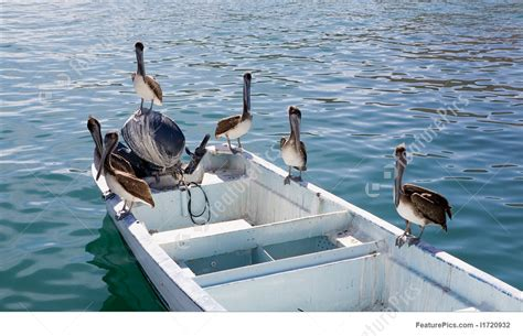 pelican boat price pelicans fishing from boat picture