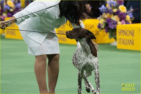 who won westminster show westminster show 2016