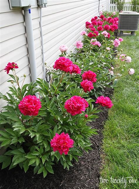 flower bed garden best 20 front flower beds ideas on