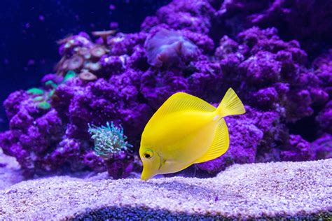 tropical fish  ultra hd wallpaper background image