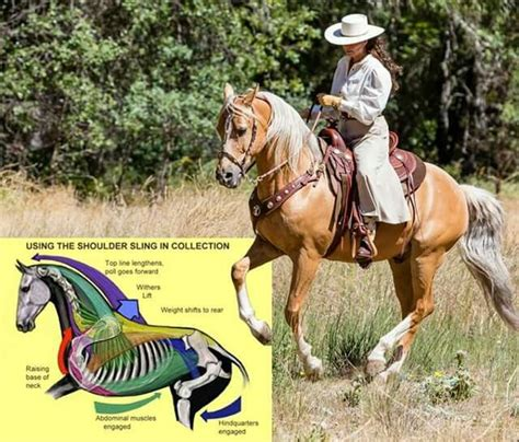 cowboy dressage and competing with kindness as the goal and guiding principle books 17 best images about cowboy dressage on