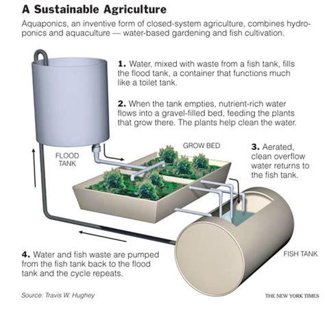 backyard aquaponics plans aquaponic systems design fairly good on line backyard