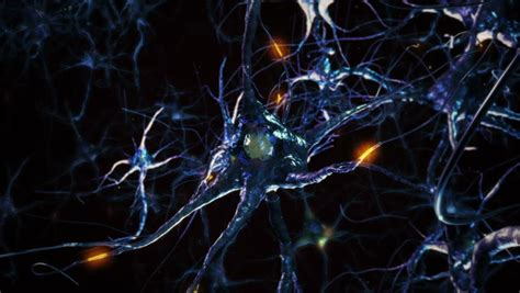 related videos hd 00 25 hd 00 30 hd 00 30 hd 00 30 neuron cells network connections orange synapse brain