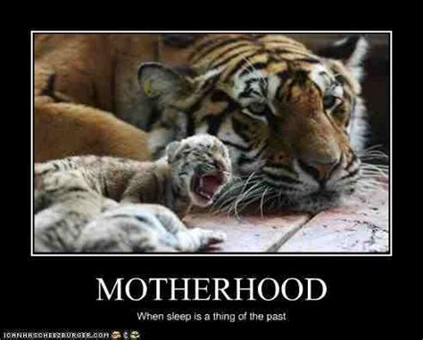 Tiger Mom Memes - your tuesday morning laughs via google what about god
