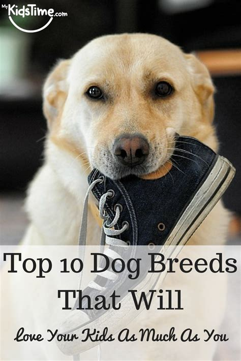 top dog breeds top 10 dog breeds that will love your kids as much as you