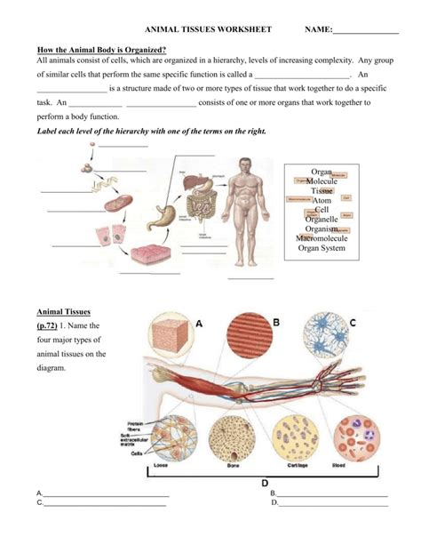 Types Of Tissues Worksheet by Uncategorized Connective Tissue Worksheet
