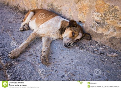 abandoned puppies abandoned lying on the ground with sad stock photos image 34656293