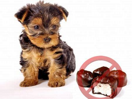 effects of chocolate on dogs chocolate facts 30 facts about chocolate factslides