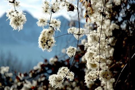 piante con fiori invernali fiori invernali piante da giardino fiori invernali